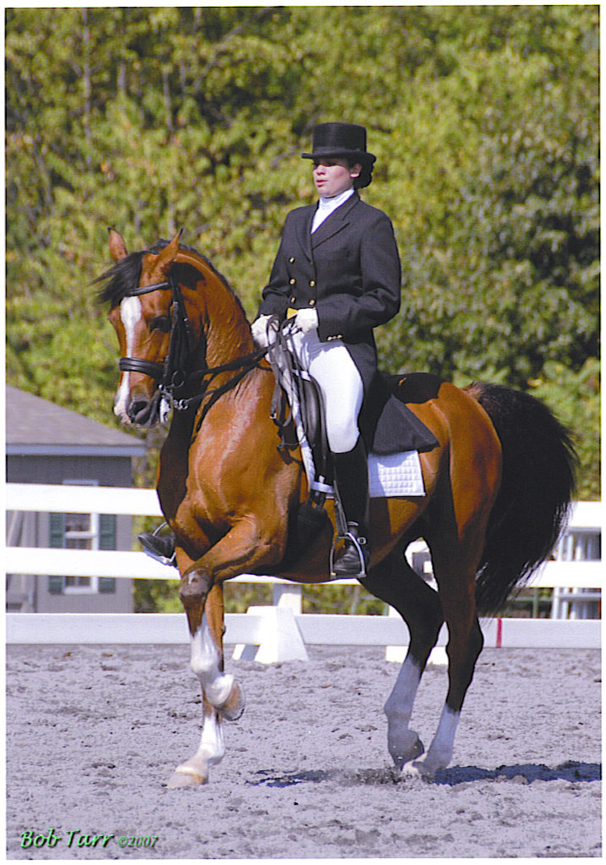 Here Come the Arabians - Dressage Today